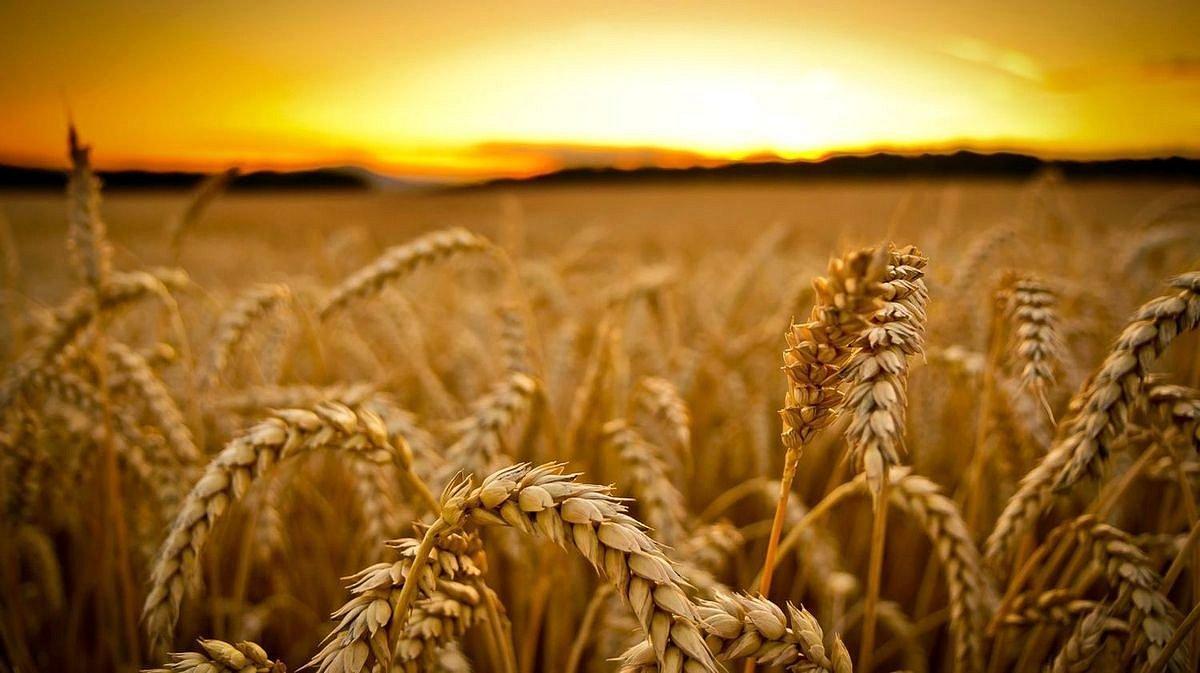 Аграрная политика государства