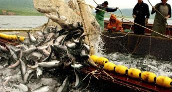 Рыбный промысел должен быть законным