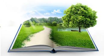 Экологическое право призвано содействовать сохранению и защите окружающей среды