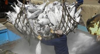 ННН-промыслом считается промысловая деятельность, осуществляемая без соблюдения национальных, региональных или международных мер по сохранению рыбных ресурсов и управлению ими